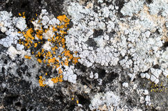 Korstmos op steen Royalty-vrije Stock Foto
