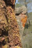 Korstmos van het toppen het Nationale Park Royalty-vrije Stock Afbeeldingen