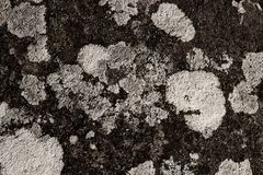 Korstmosdetail op een rots royalty-vrije stock foto