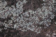 Korstmossen en mos die de oppervlakte van de granietrots behandelen Royalty-vrije Stock Afbeelding