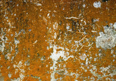 Korstmossen op concrete muur Stock Foto's