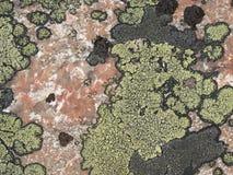 Korstmossen van groene en zwarte kleur op de steen, het graniet Textuur Stock Fotografie
