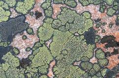 Korstmossen van groene en zwarte kleur op de steen, het graniet Textuur Stock Afbeeldingen