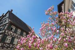 Korsvirkes- fasad med magnoliaträdet Royaltyfri Bild