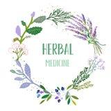 Kort eller etikett för växt- medicin med ramen - blommor, växter och örter också vektor för coreldrawillustration stock illustrationer