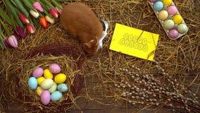 Kort för bästa sikt för begrepp för symbol för fluffig kanineaster beröm traditionellt