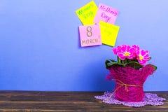 Kort för dagen för valentin` s, internationell dag för kvinna` s, mars 8, dag för moder` s Rosa härlig primula i kruka som gåvan Fotografering för Bildbyråer