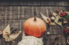 kort för halloween eller tacksägelsebegreppshälsning hand i tröja Arkivbilder