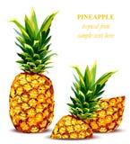 Kort för stil för ananasfrukt tropiskt också vektor för coreldrawillustration royaltyfri illustrationer