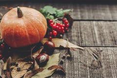 Kort för tacksägelse- eller halloween begreppshälsning härlig pumpk Arkivfoto