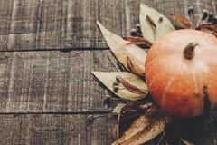 Kort för tacksägelse- eller halloween begreppshälsning härlig pumpk Royaltyfri Bild