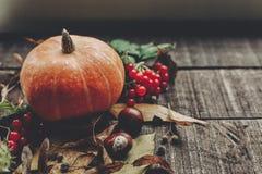 Kort för tacksägelse- eller halloween begreppshälsning härlig pumpk Fotografering för Bildbyråer
