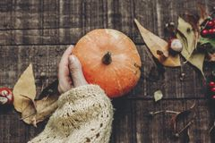 Kort för tacksägelse- eller halloween begreppshälsning hand i tröja Royaltyfri Foto