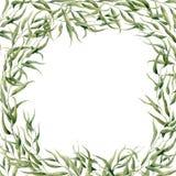 Kort för vattenfärgeukalyptusram Handen målade den blom- gränsen med filialer och sidor som isolerades på vit bakgrund för stock illustrationer