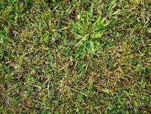 kort gräs arkivbild