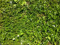 Kort gräsmatta arkivbild