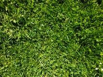 Kort gräsmatta arkivfoton
