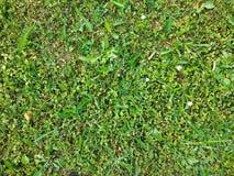 Kort gräsmatta arkivfoto