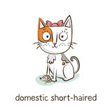 Kort-haired hemhjälp Katttecken på vit Arkivbild