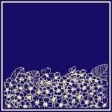 Kort med primulan med blå bakgrund diagram Botanisk dra blomma royaltyfri illustrationer