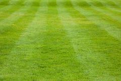 Kort stavelsesnittgräs med synliga band Arkivbilder
