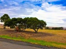 Korta träd på den torra gula öknen fotografering för bildbyråer