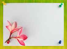 Kortdesign, frangipani (plumeria) Royaltyfri Fotografi