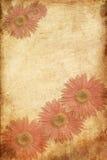 kortet blommar hälsningsfjädertappning Royaltyfri Bild