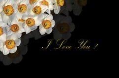 Kortet med vita påskliljor i det bästa hörnet och hälsningen älskar jag dig på en svart bakgrund Royaltyfri Fotografi