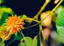 Korth chałupy kwiaty które r na drzewnym ` s naturalnego przyrosta obj Obrazy Stock