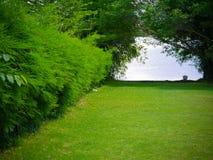 Kortkortträdgård med bambuträdet arkivfoton