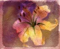 kortliljavattenfärg Royaltyfri Foto