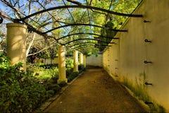 korytarz winorośli objęte arch Obrazy Stock