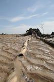 Korzeń na plaży Zdjęcie Royalty Free