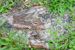 Korzeń na ziemi w ogródzie Fotografia Stock