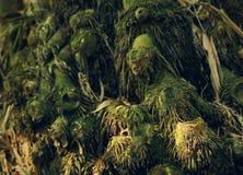 Korzenie bambus Zdjęcia Royalty Free