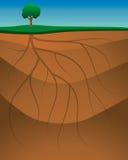 Korzenie Gruntują tło ilustracji