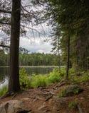 Korzenie na ścieżce jezioro zdjęcia royalty free