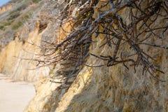 Korzenie przy plażą Obraz Royalty Free