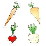 korzeniowi warzywa Zdjęcia Stock