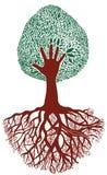korzeniowy drzewo Obraz Royalty Free