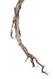 korzeniowy drzewo Zdjęcia Stock
