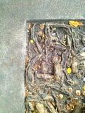 Korzeniowy drzewo i granica Zdjęcia Stock