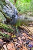 Korzeniowy drzewo na małej siklawie w suchym seasom Zdjęcie Stock