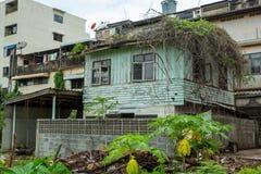 Korzeniowy drzewo na zaniechanym domu fotografia royalty free