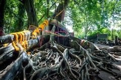 Korzeniowy drzewo z girlandą w lesie Zdjęcie Stock