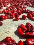 Korzenni jedzenie komesi od korzennych warzyw obrazy royalty free