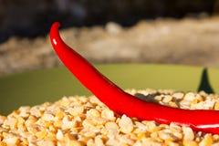 Korzenny chili pieprz w naczyniu z grochami zdjęcia stock