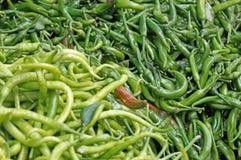 Korzenny zielony pieprz Zdjęcie Royalty Free