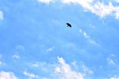 Kos Latająca wysokość W niebieskim niebie Zdjęcie Stock